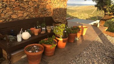 Arteventura potten en planten